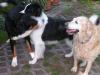 Hundepension Baune Warendorf